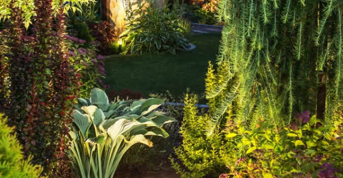 Landscape lighting miami fl chop chop landscaping miami fl landscaper mozeypictures Choice Image